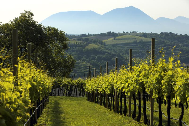 Anteprima Gustus: Paesaggi del vino dei Colli Berici
