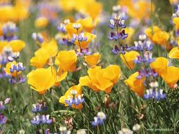 fiorigratis