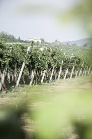vigne accordini